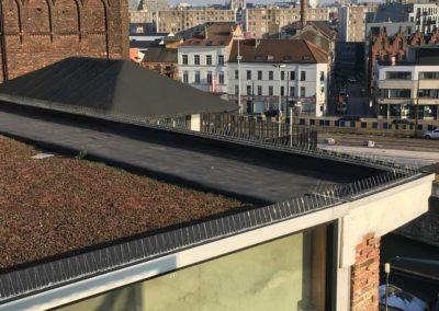 Pics anti pigeons sur rebord de toiture et fenêtres